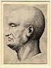 Hollar, Caricature Head
