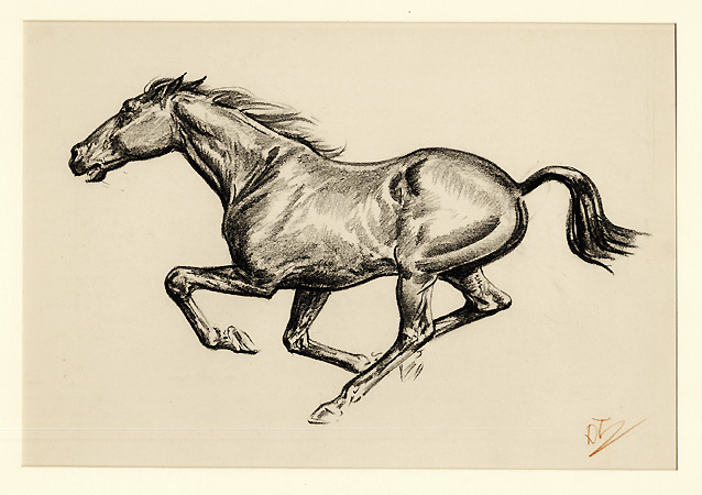 Running arabian horse drawing - photo#19